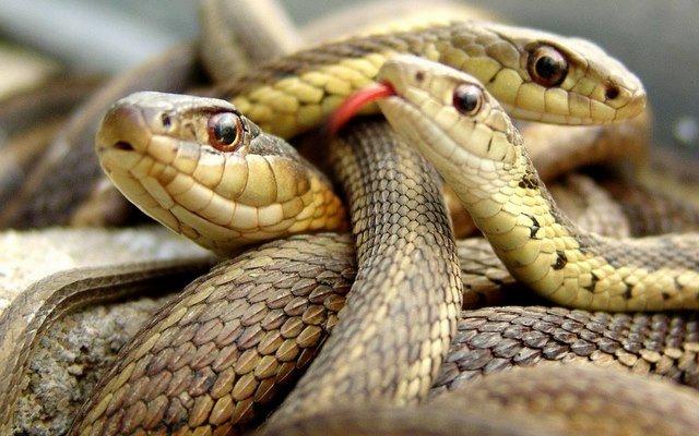 mơ thấy rắn đánh con gì
