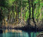 Kinh nghiệm du lịch Cà Mau nổi tiếng được du khách yêu thích