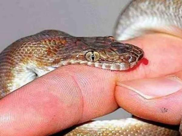 Mơ thấy rắn cắn đánh con gì để trúng lớn?