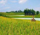 Mơ thấy cánh đồng là điềm báo điều gì?
