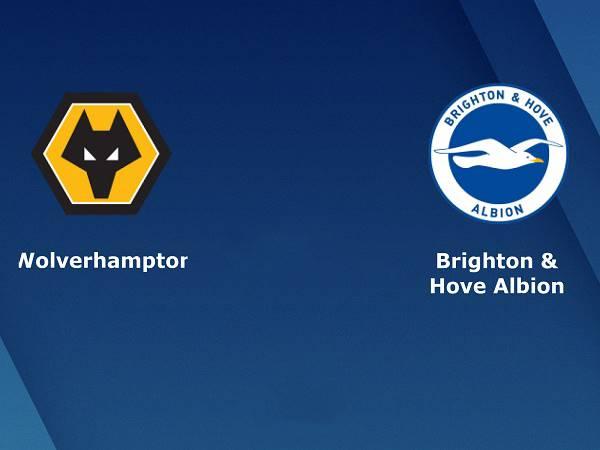 Soi kèo Wolves vs Brighton – 18h00 09/05, Ngoại Hạng Anh